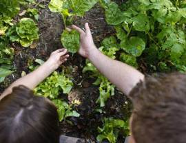 coaching jardinage